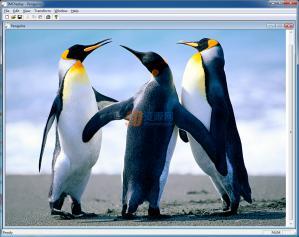 图片处理ImageMagick v7.0.5-4